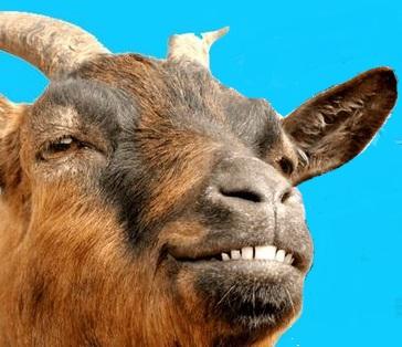 goatcar